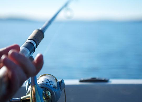 Fiskeri nærbillede